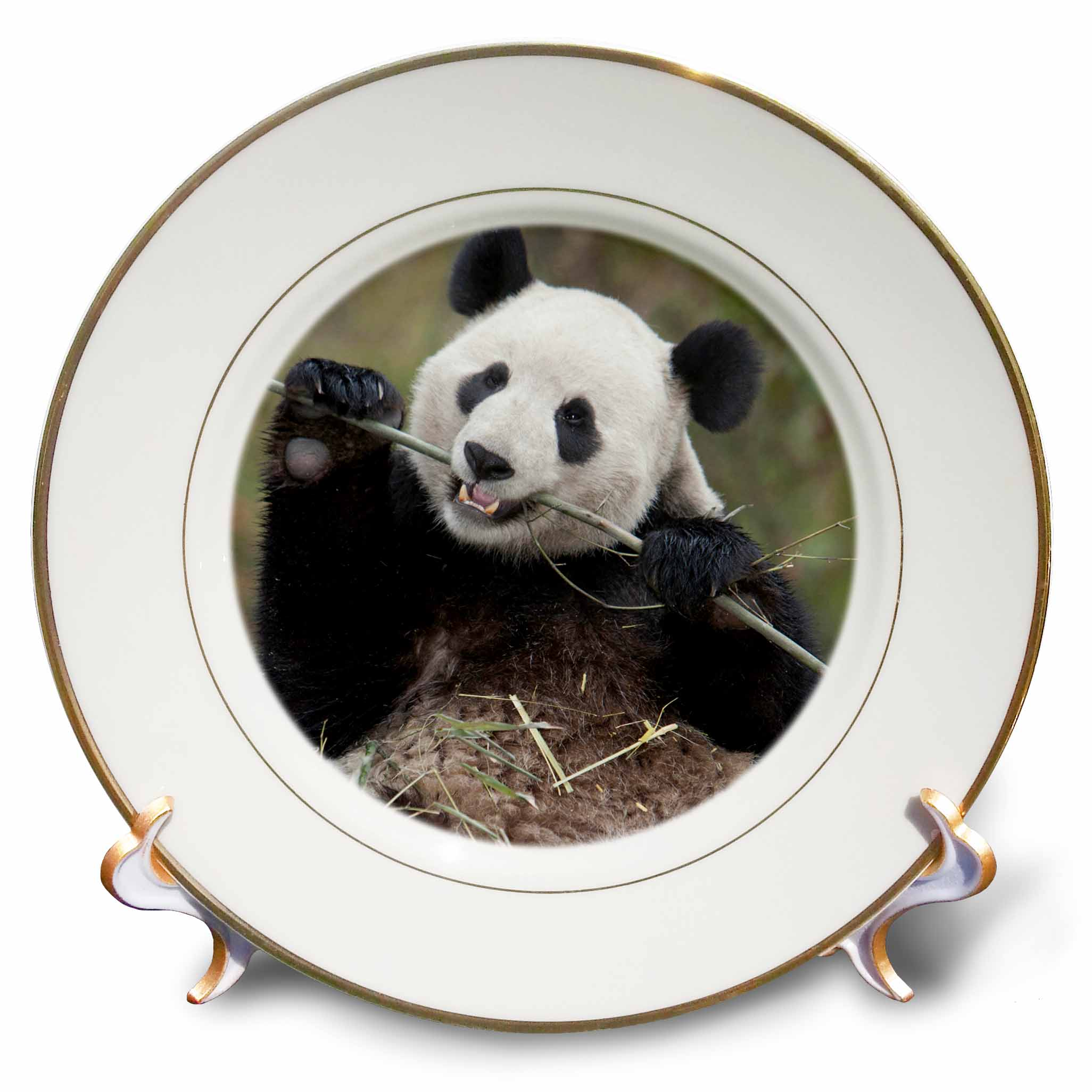3dRose China, Wolong, Giant panda bear eating bamboo - AS07 AGA0009 - Alice Garland, Porcelain Plate, 8-inch