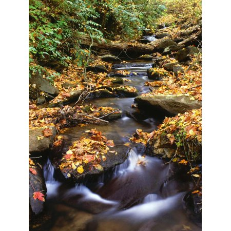 Small Creek in Autumn, Cherokee National Forest Georgia, USA Print Wall Art By Jaynes Gallery