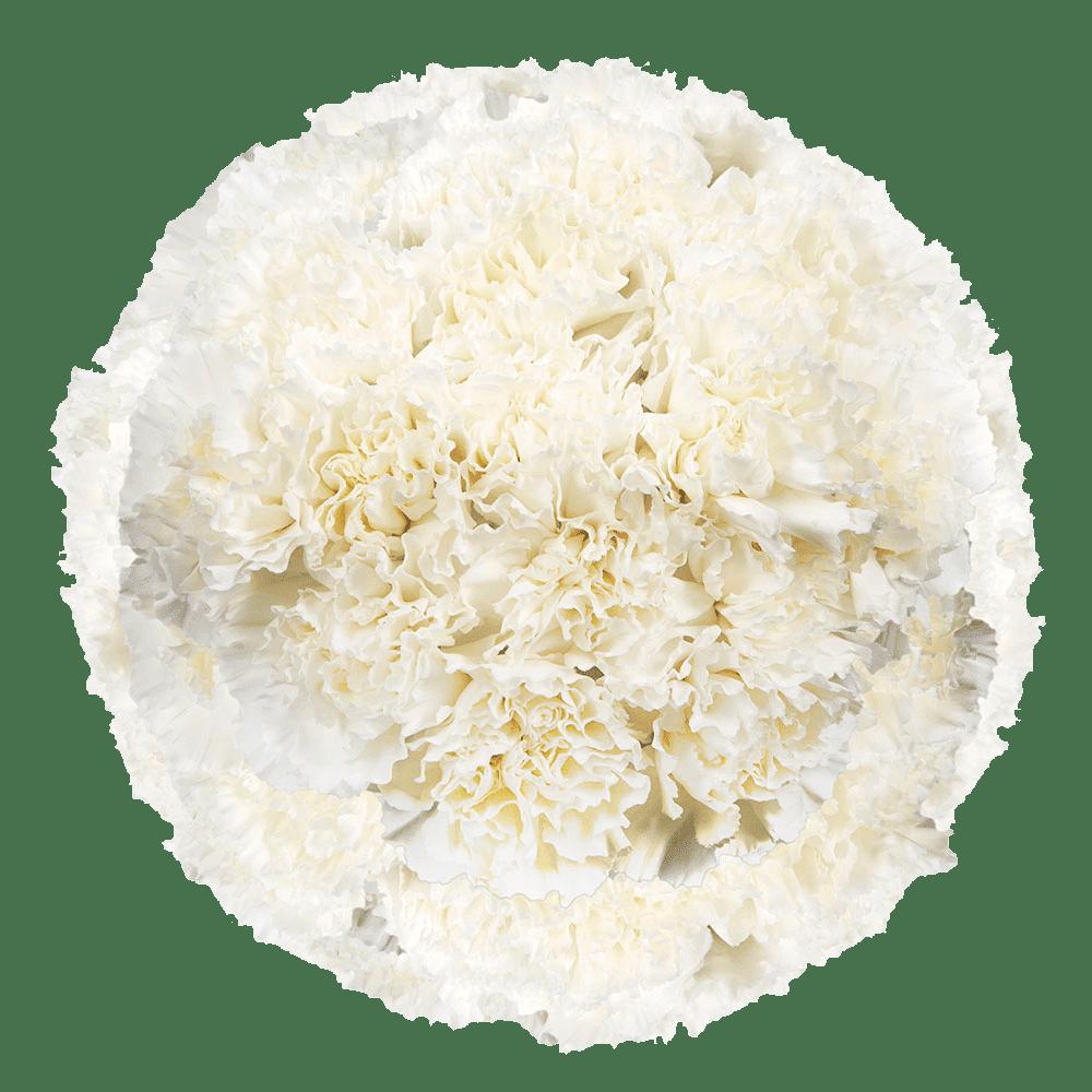 White Carnation Flower Custom Unique Durable Custom Foldable Umbrella