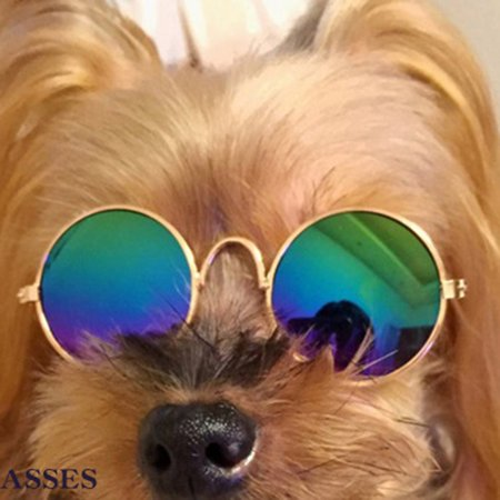 Fashion Cat's Glasses Durable Glasses Cat's Grooming Dogs Sunglasses Cool Glasses Universal Pet Supplies - image 1 of 3