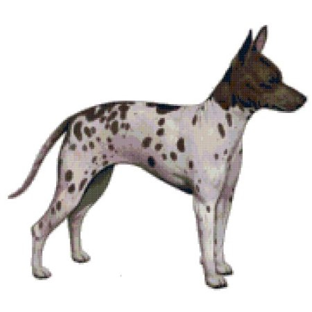 - American Hairless Rat Terrier Dog Counted Cross Stitch Pattern