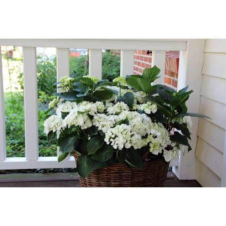Canvas Print Balcony Hydrangea Basket Flower Stretched Canvas 10 x 14