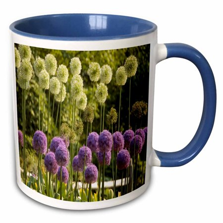 3dRose Purple n Light Green Flowers At Brooklyns Botanical Garden - Two Tone Blue Mug, 11-ounce (Botanical Gardens Brooklyn Halloween)