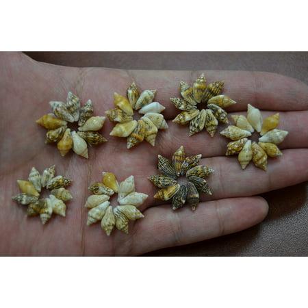 Shell Jewelry Shell (400 Pcs Nassa Sea Shell Beads Shell Circles Rings Crafts Jewelry 1/2
