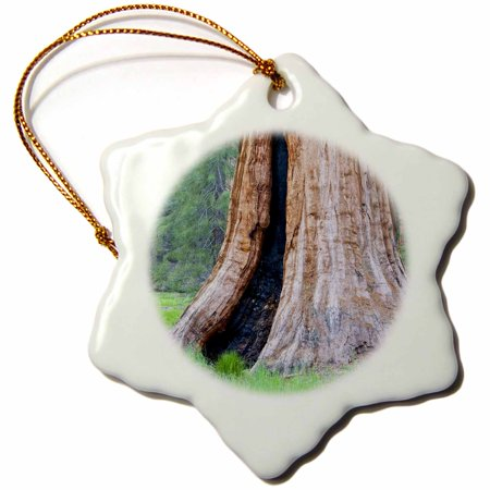 3dRose CA, Sequoia NP, Big Trees Trail, giant Sequoias - US05 JWI0143 - Jamie and Judy Wild - Snowflake Ornament, 3-inch (Giant Sequoia Tree)