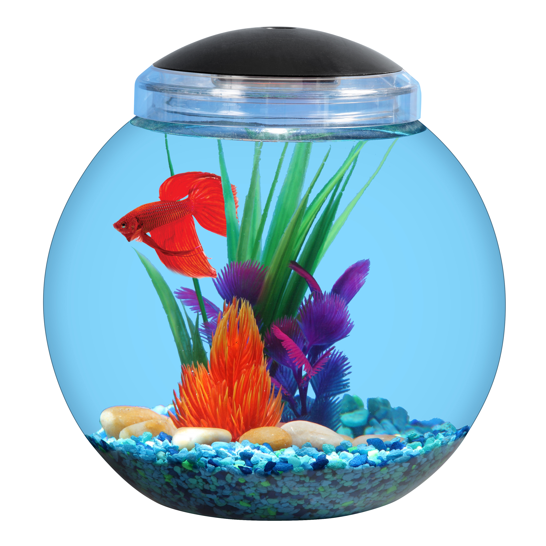 "Aqua Culture 1-Gallon Globe Bowl with LED Light, 7.25"" DIA x 8.5""H"