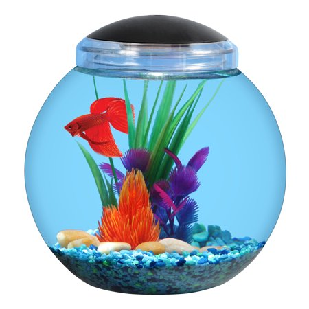 Aqua culture 1 gallon globe bowl with led light dia for How much are betta fish at walmart