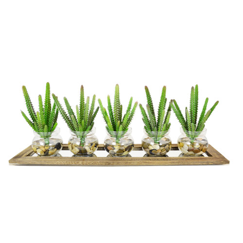 Creative Displays, Inc. 5 Piece Euphorbia Cactus Pot and Display Tray Planter
