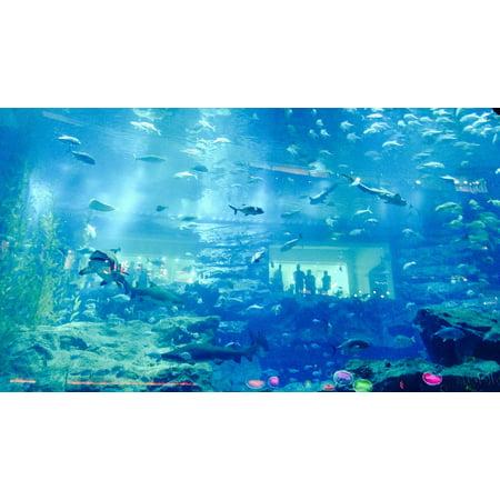 LAMINATED POSTER Aquarium Fish Dubai Poster Print 11 x (Dubai Airport Stores)