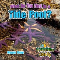 What Do You Find in a Tide Pool? - eBook