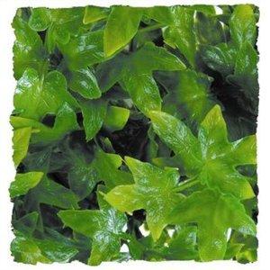 Zoo Med Laboratories SZMBU12 Natural Bushy Congo Ivy, Small Multi-Colored