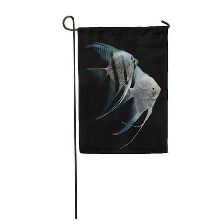 SIDONKU Silver Angelfish Angel Fish Freshwater Aquarium Black Scalar Aquatic Garden Flag Decorative Flag House Banner 12x18