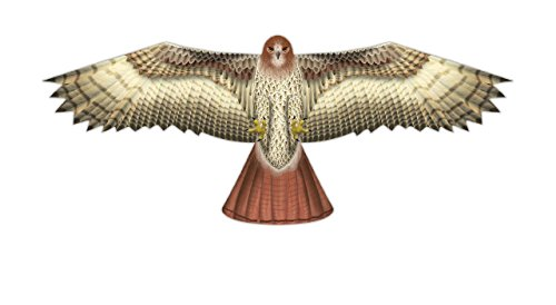 "70"" Hawk Kite by X-Kites"