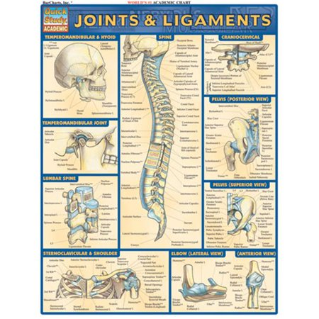 BarCharts- Inc. 9781572226845 Joints & Ligaments