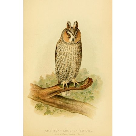 Hawks & Owls of the US 1893 Long-eared Owl Canvas Art - JL Ridgway (18 x 24)