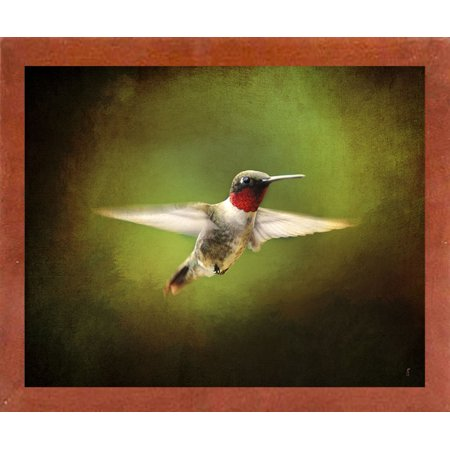"Portrait Of A Hummingbird In Flight-JAIJOH139861 Print 10.75""x13.25"" by Jai Johnson in a Affordable Canadian Walnut Medium"