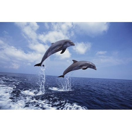 Dolphin Art - Bottlenose Dolphins Jumping Seascape Animal Landscape Photo Print Wall Art By Craig Tuttle