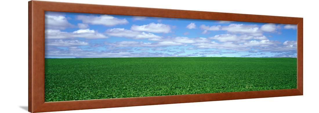bush bean field  mcminnville  oregon  usa framed print wall art
