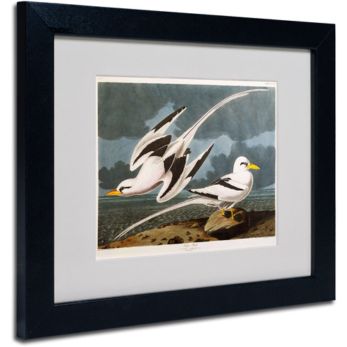 "Trademark Fine Art ""Tropic Bird"" Canvas Art by John James Audubon, Black Frame"
