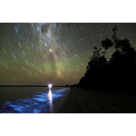 Victorian Star - Star trails and bioluminescence in the Gippsland Lakes Victoria Australia Poster Print