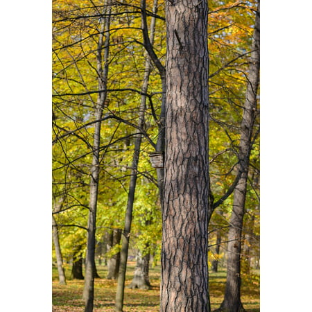 Laminated Poster Park Tree Nature Sun Birdhouse Autumn Colors Poster Print 11 x
