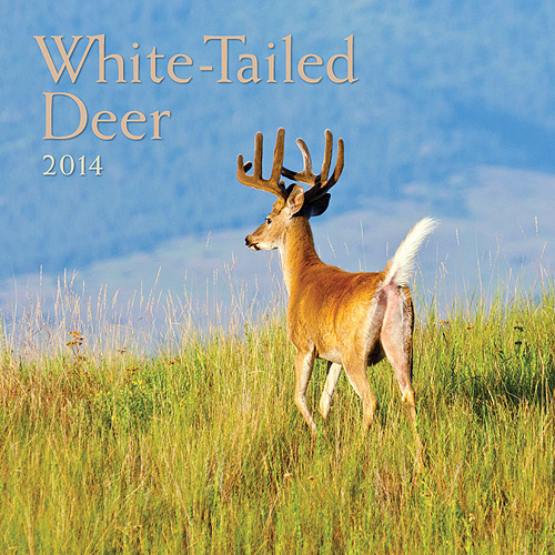 Avalanche White Tailed Deer 2014 Wall Calendar