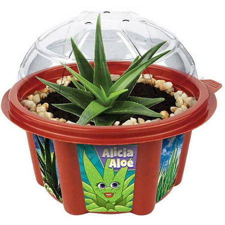 Dunecraft Alicia Aloe Mini Dome Garden