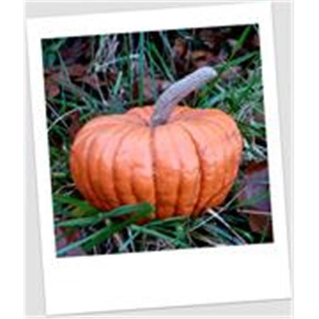 Craft-Tex PUM 5 Long Stem Pumpkin Fall Harvest