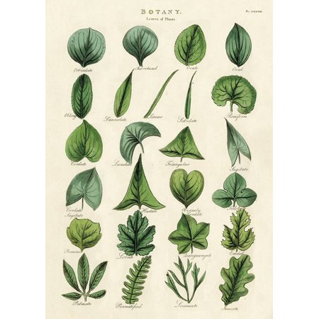Cavallini & Co. Botany Leaves Decorative Paper Sheet, Luxury Italian archival paper stock By Cavallini Co From USA