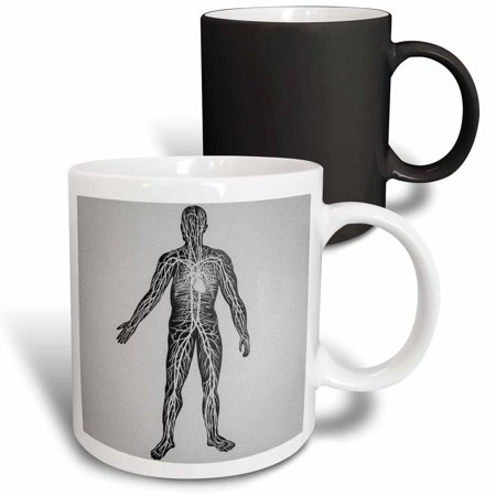 3dRose Vintage Medical Study Glass Slide the Human Circulatory System 1900 - Magic Transforming Mug, -