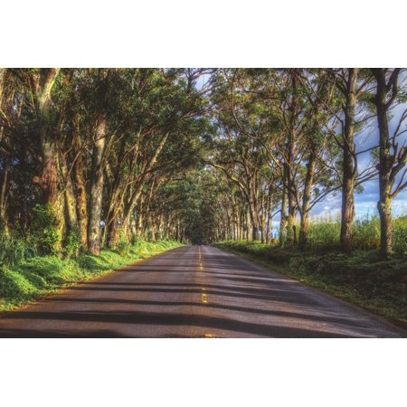 Tree Tunnel to Old Koloa Town, Kauai Hawaii Country Road Landscape Photography Print Wall Art By Vincent