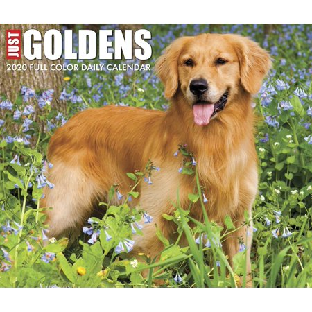 Just Goldens 2020 Box Calendar (Dog Breed Calendar) (List Of Dog Breeds Available In India)