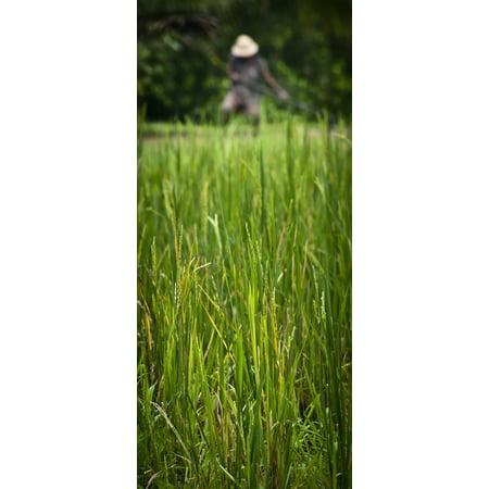 Worker On Rice Field Ubud Bali Indonesia Stretched Canvas - Alex Adams  Design Pics (20 x 44)