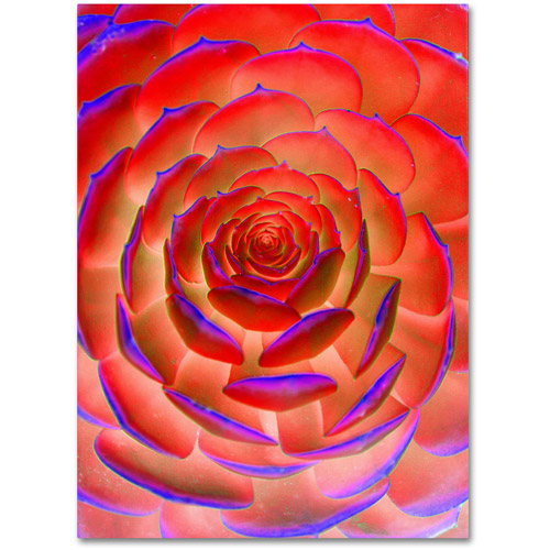 "Trademark Fine Art ""Plant Art"" Canvas Wall Art by Patty Tuggle"