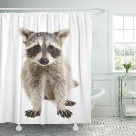 Wild Animals Bath (PKNMT Racoon Portrait of Raccoon Sitting White Wildlife Adorable Baby Animal Attractive Shower Curtain Bath Curtain 66x72 inch)