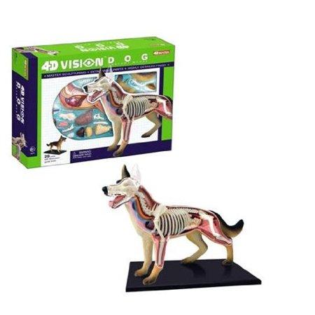 4D Vision Dog Anatomy Model - Walmart.com