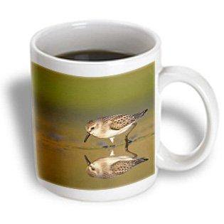3dRose New York City, Jamaica Bay Refuge, Sandpiper bird - US33 BJA0045 - Jaynes Gallery, Ceramic Mug, 15-ounce