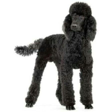 Team Standard Poodle (Standard Poodles for Beginners - eBook )