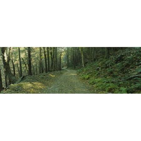 Trees In A National Park Shenandoah National Park Virginia Usa Poster Print
