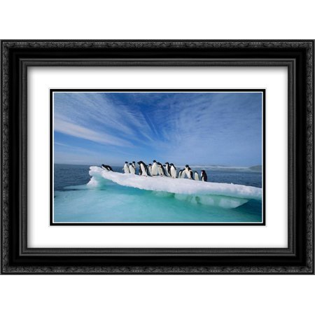 Adelie Penguin group crowding on melting summer ice floe, Possession Island, Ross Sea, Antarctica 2x Matted 24x18 Black Ornate Framed Art Print by De Roy,