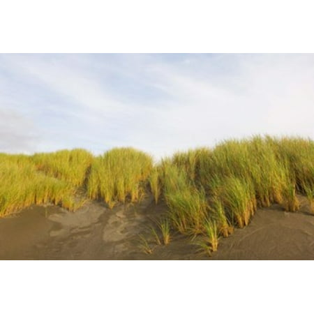 Beach Grass On Sand Pistol River State Scenic Viewpoint Oregon Usa Poster Print By Panoramic Images  36 X 24