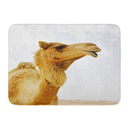 Camel Lights Cigarette - GODPOK Arabian Looking Up at Wild Dromedary Camel in The Desert with Light Blue White and Hint of Sand Dunes Sky Rug Doormat Bath Mat 23.6x15.7 inch