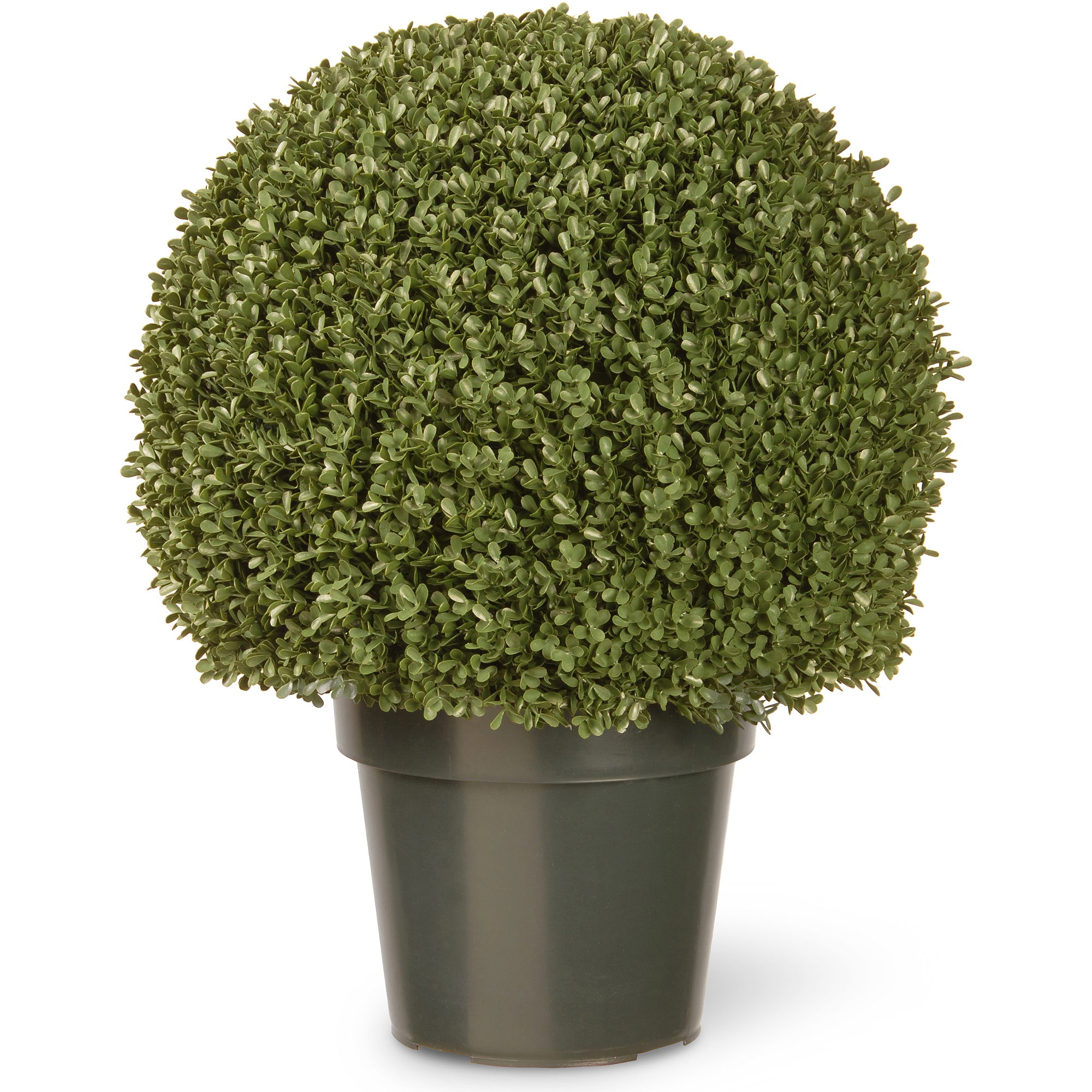 "National Tree 22"" Mini Boxwood Ball with Green Pot"