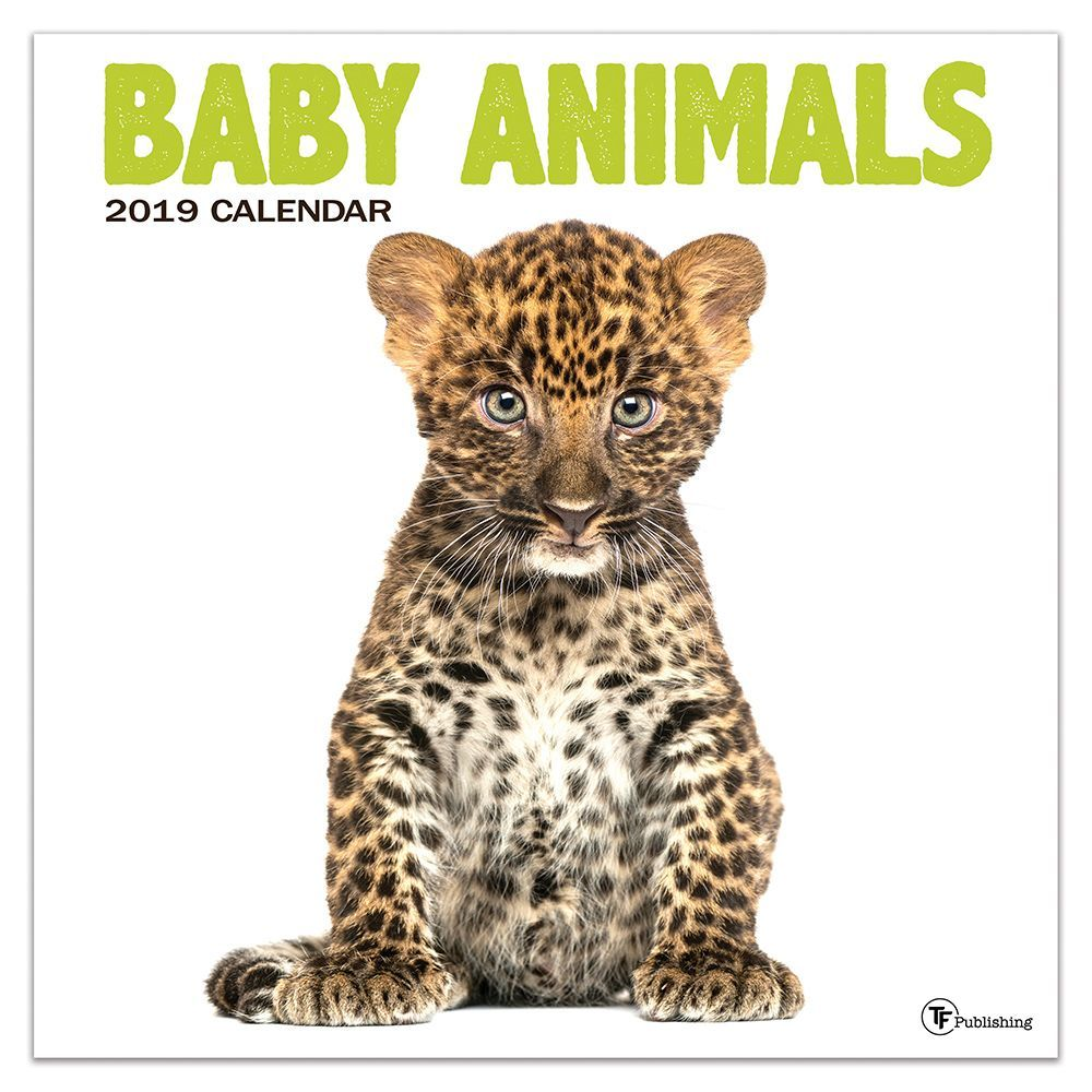 "2019 Baby Animals 12"" x 12"" January 2019-December 2019 Wall Calendar by TF Publishing"