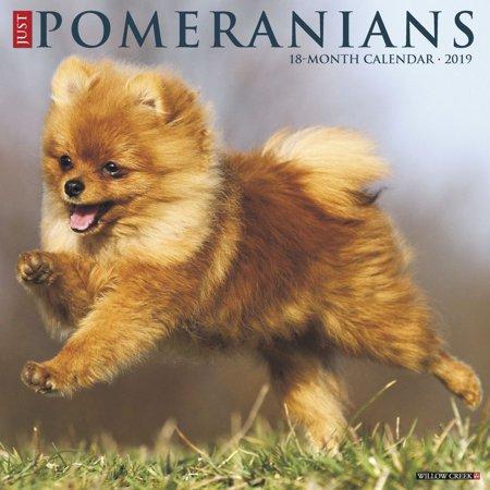 Just Pomeranians 2019 Wall Calendar (Dog Breed Calendar) (Other)