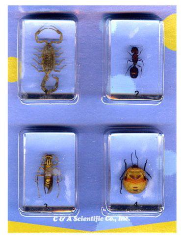 Bugs Specimen #1 Set by C & A Scientific