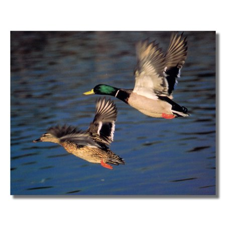 Mallard Duck Flying Lake Cabin Wall Picture Art - Wood Duck Pictures