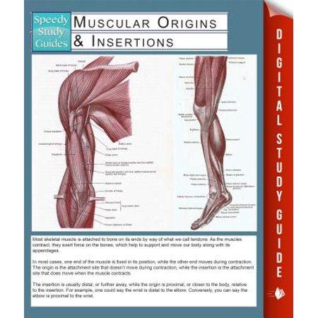 Muscular Origins & Insertions (Speedy Study Guides) -