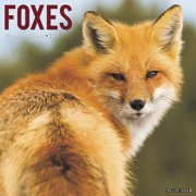 Foxes 2020 Wall Calendar (Other)