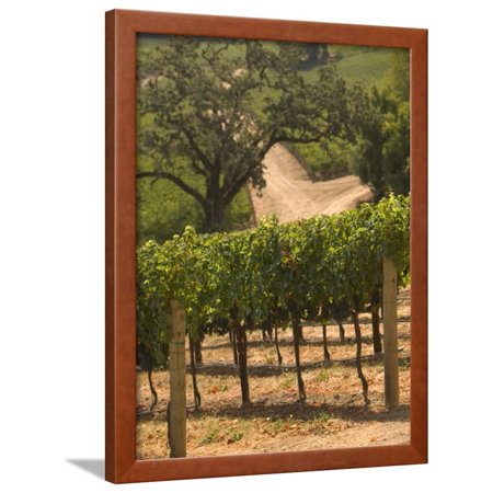 Hess Collection and Winery Vineyard View, Napa Valley, California Framed Print Wall Art By Walter Bibikow (Hess Winery)
